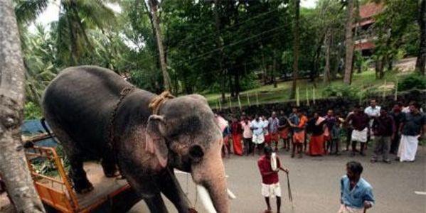 Спасите слонов в Южной Индии!