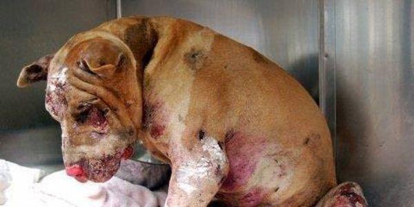 Остановите жестокое обращение с животными!