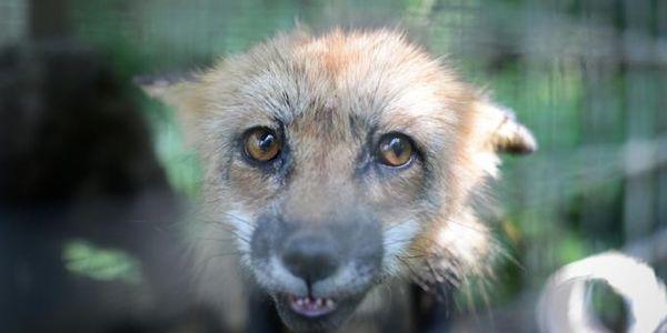 Животные под угрозой - помогите животным