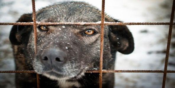 Против торговли кожей собак