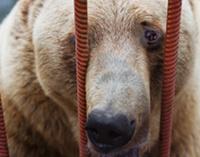 Против издевательств над животными в Лондоне