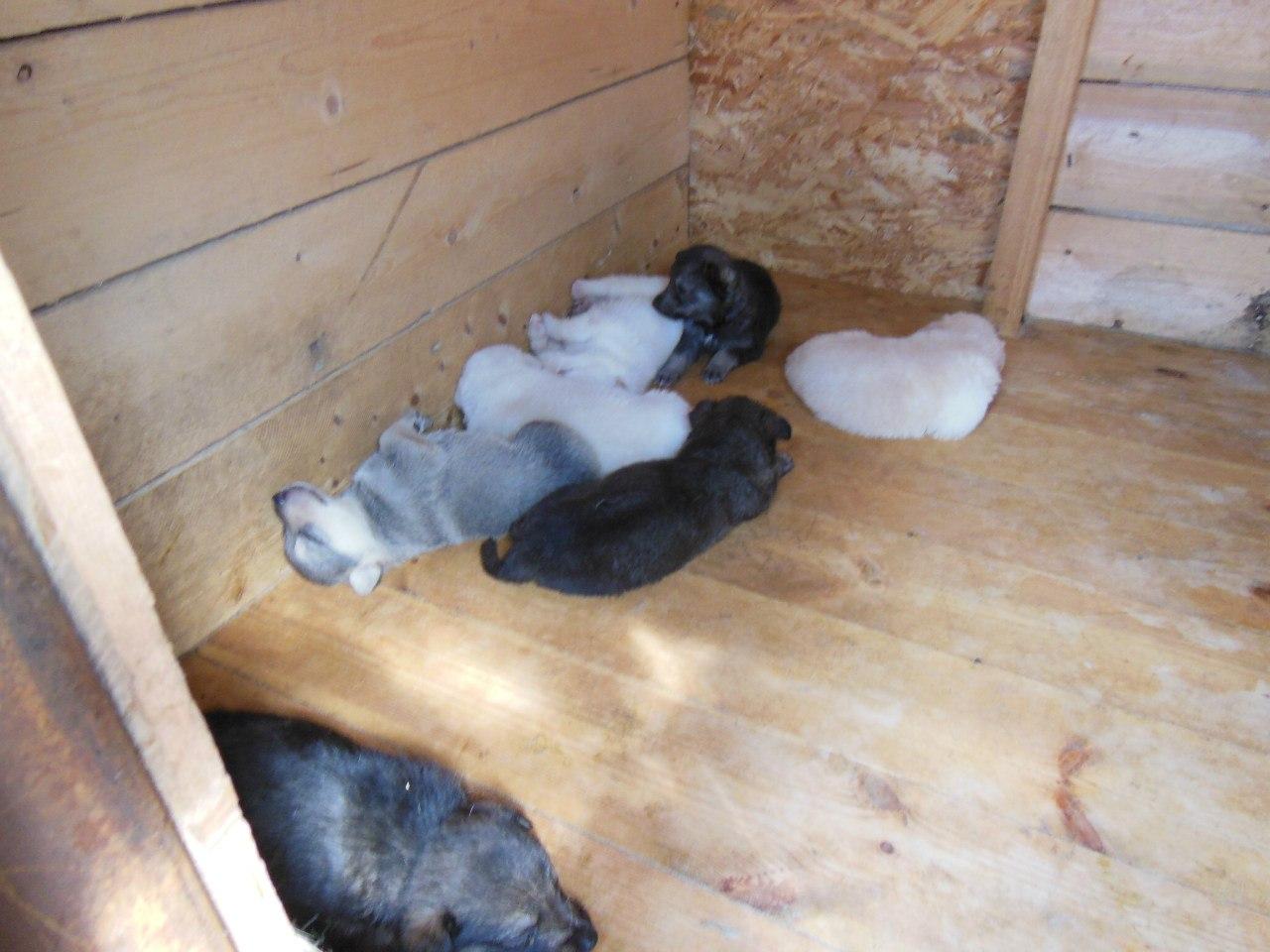 Фонд охраны животных Чувашии