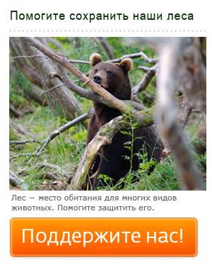 Помогите сохранить лес!