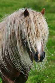 Ирландский пони