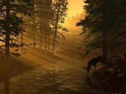 Ирландский лес