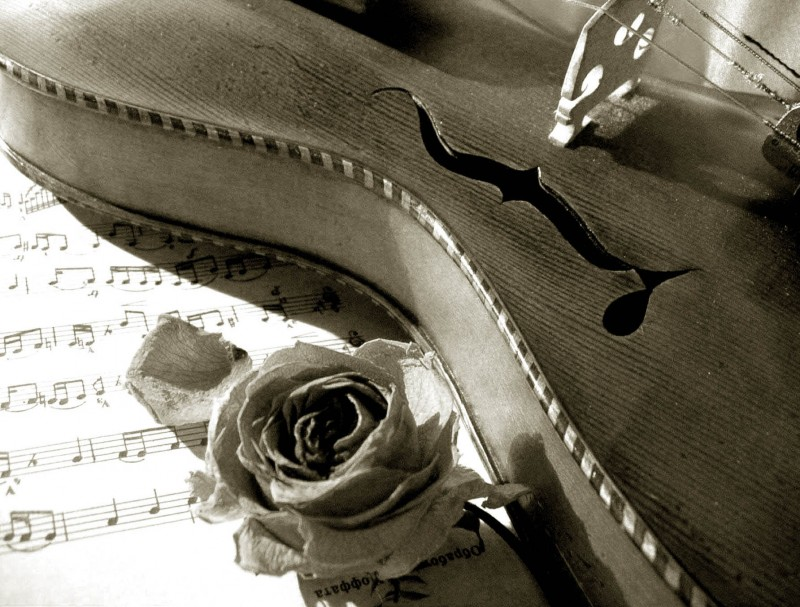 Ирландская роза